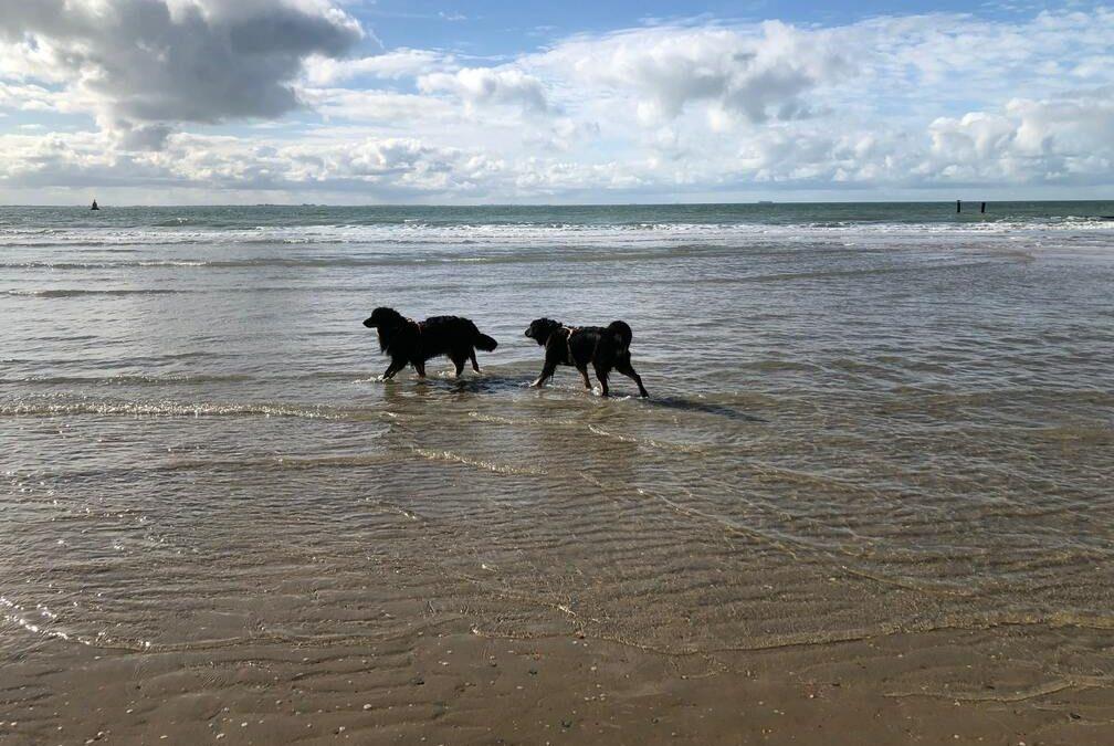 Urlaub in Zoutelande mit Aijana und Hera…